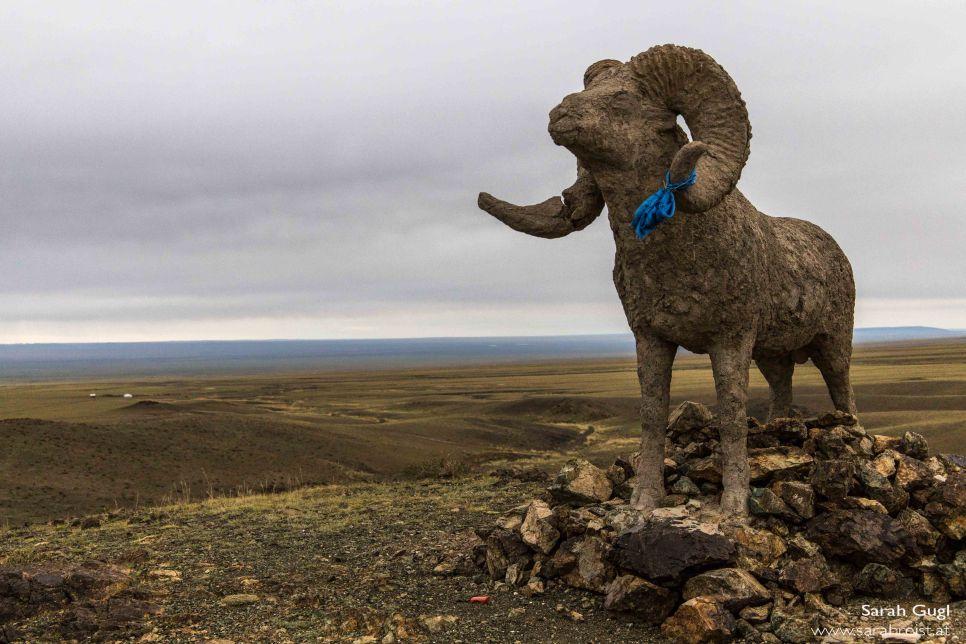 Und nochmals das heilige Schaf