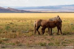 Pferde, welche mir nicht den Hintern zukehren.