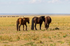 Pferdehintern